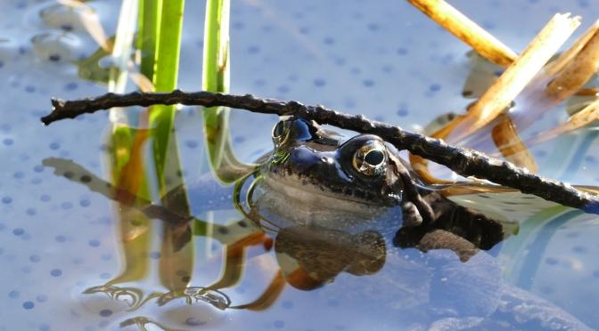 En levande natur beror på vår förmåga att känna kärlek till grodorna
